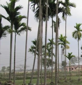 Amazing Tripura