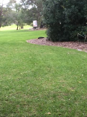 Green carpet: Perth
