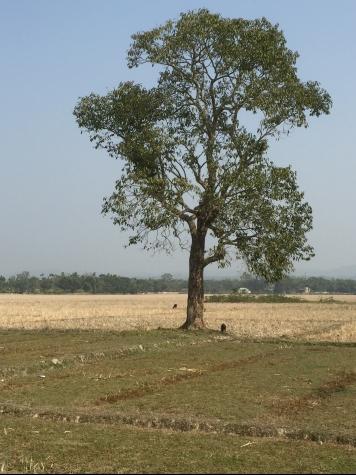 Kls, Tripura
